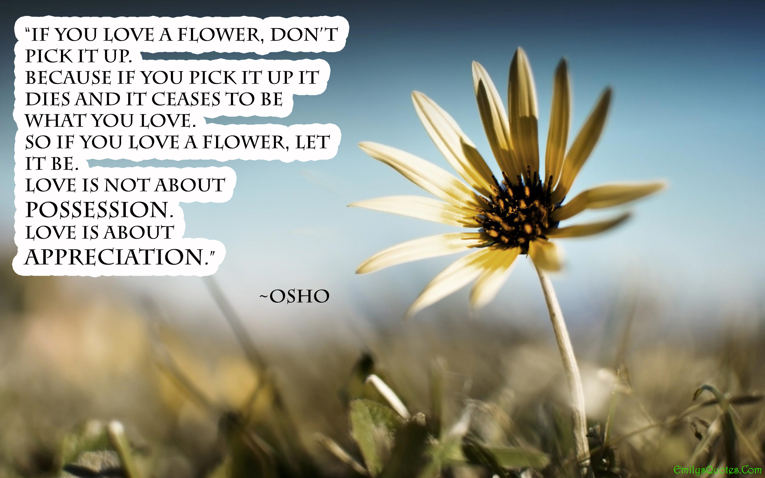 Love Flower Quotes If You Love A Flower Don't Pick It Upbecause If You Pick It Up