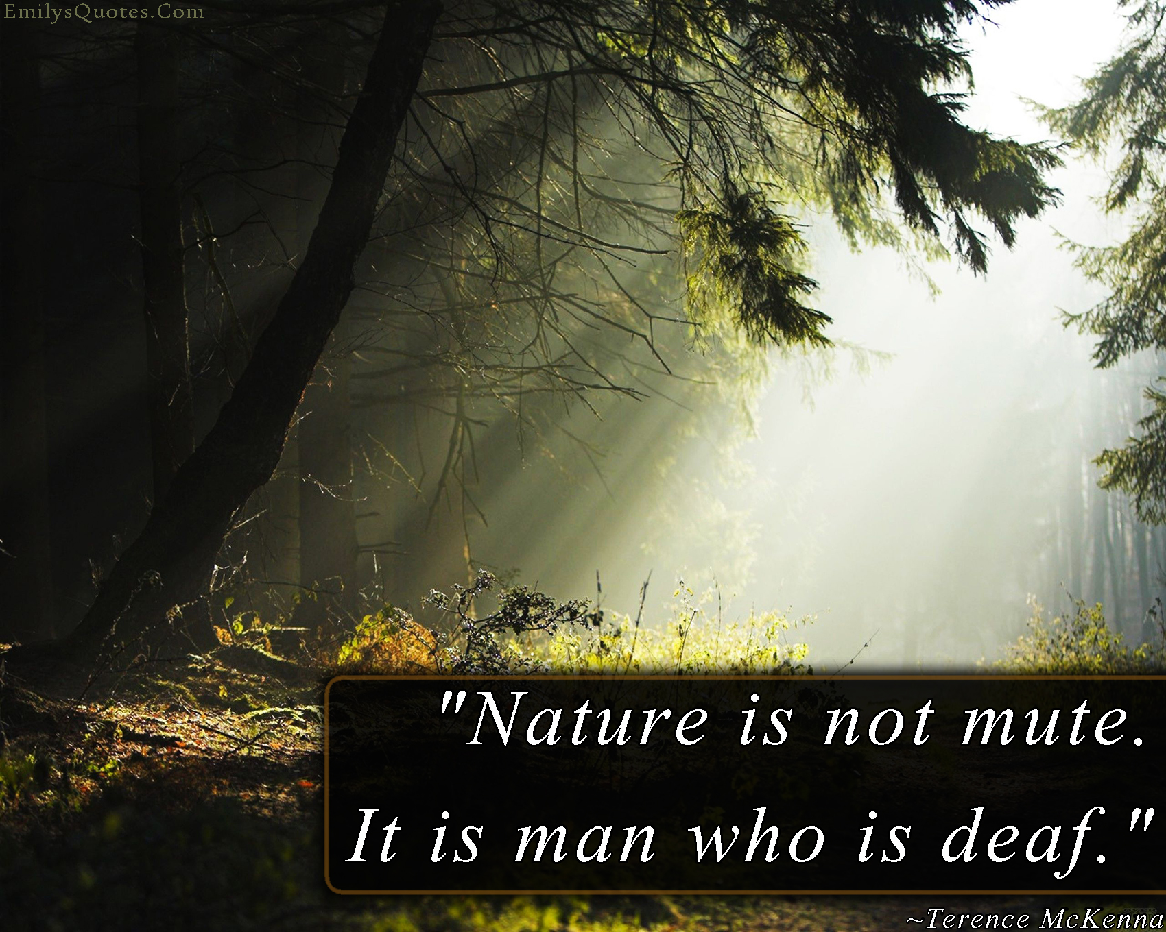 EmilysQuotes.Com - nature, people, ignorance, Terence McKenna, amazing, great