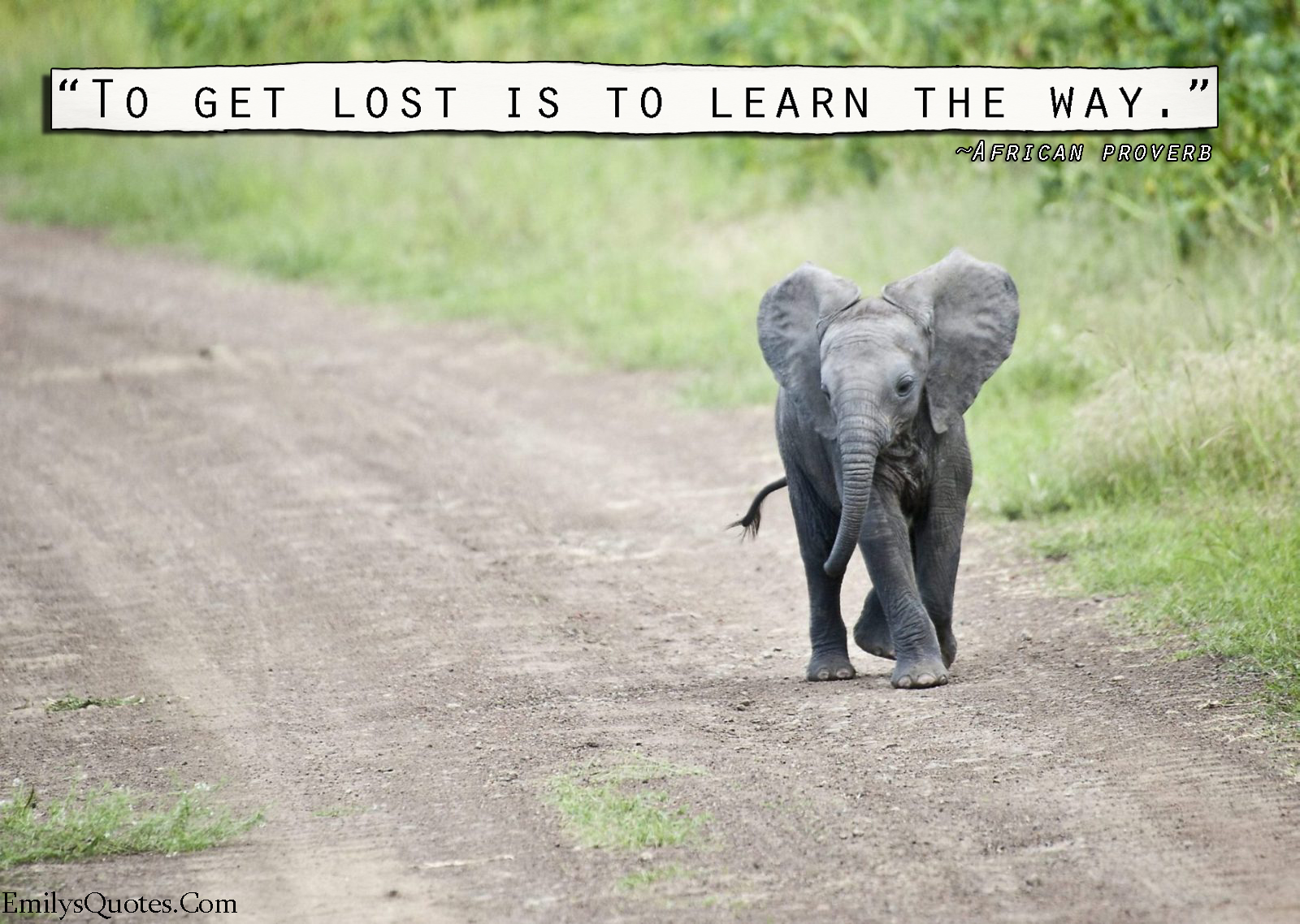 EmilysQuotes.Com - lost, learning, understanding, wisdom, African proverb