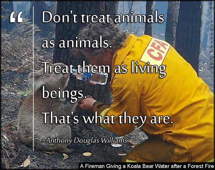 EmilysQuotes.Com - A Fireman Giving a Koala Bear Water after a Forest Fire, animals, relationship, living beings, understanding, positive, inspirational, being a good person, Anthony Douglas Williams