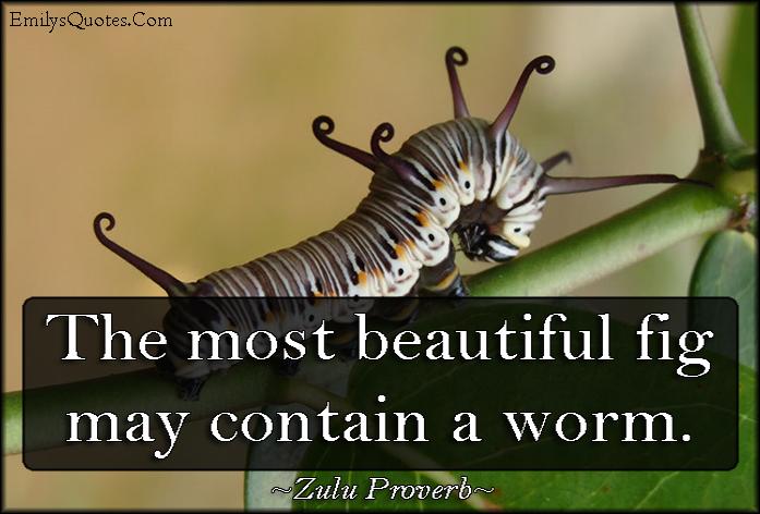 EmilysQuotes.Com - beauty, fig, worm, understanding, wisdom, African proverb, Zulu Proverb