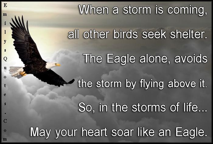 EmilysQuotes.Com - life, storm, eagle, inspirational, motivational, amazing, great, encouraging, courage, unknown
