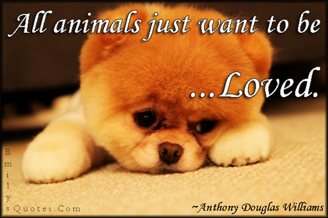 Animals Quotes Prepossessing All Animals Just Want To Be Loved  Popular Inspirational Quotes