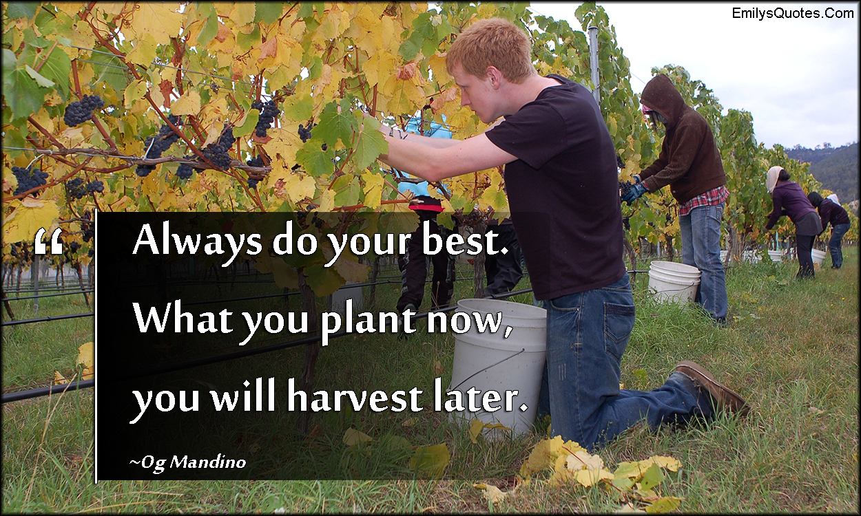 EmilysQuotes.Com - do your best, plant, harvest, now, later, inspirational, encouraging, Og Mandino