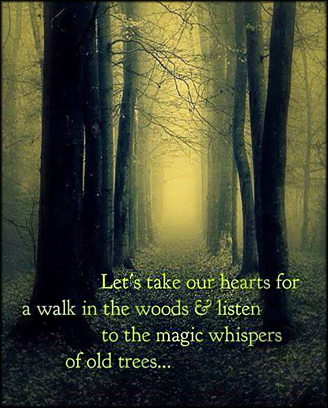 EmilysQuotes.Com - heart, walk, woods, listen, magic, whispers, old trees, nature, amazing, inspirational, dream, unknown