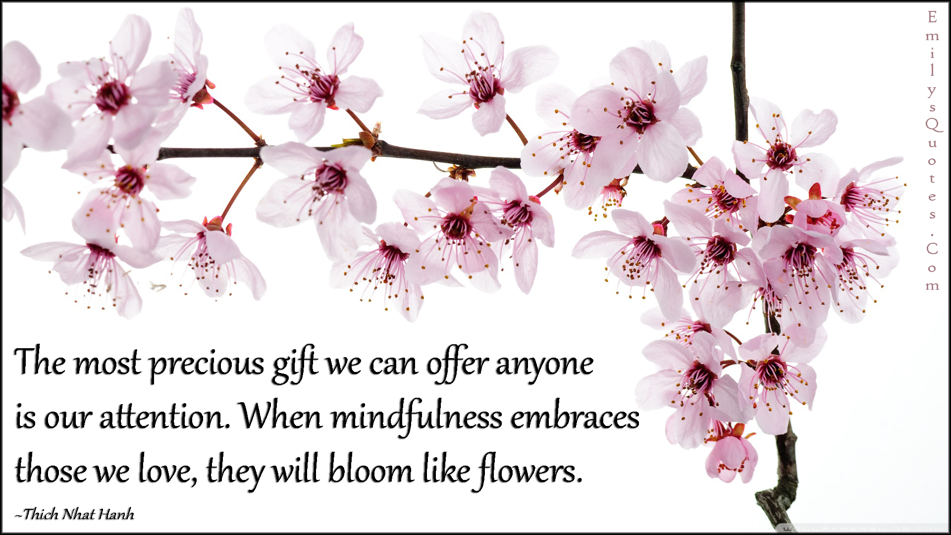 EmilysQuotes.Com - precious gift, offer, attention, caring, mindfulness, embrace, love, bloom, flower, relationship, amazing, great, inspirational, positive, wisdom, kindness, Thich Nhat Hanh