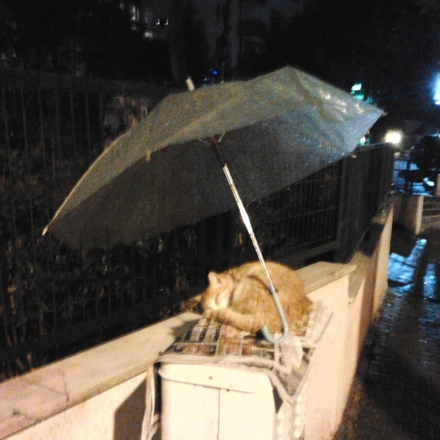 Pictures That Will Restore Your Faith In Humanity - 8. And this person decided that no cat should have to get wet.