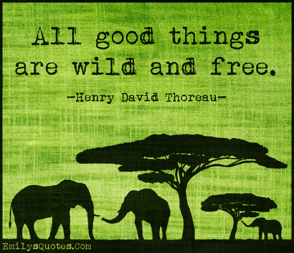 """Quotes All Good Things Are Wild And Free """"all Good Things Are Wild And"""