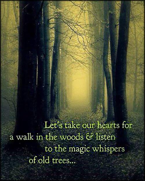 Woods Quotes: Popular Inspirational Quotes At EmilysQuotes