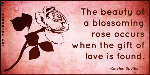 The beauty of a blossoming rose occurs when the gift of love is found.